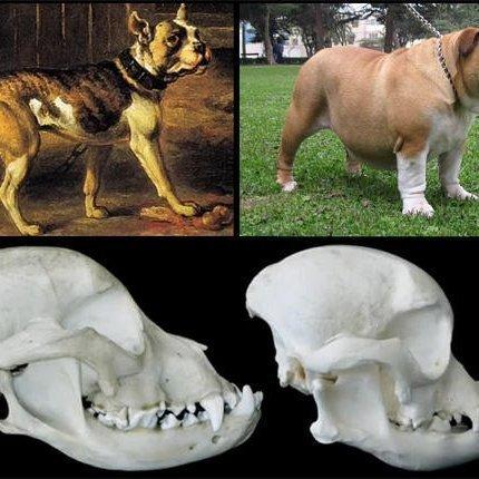 Criando perros enfermos
